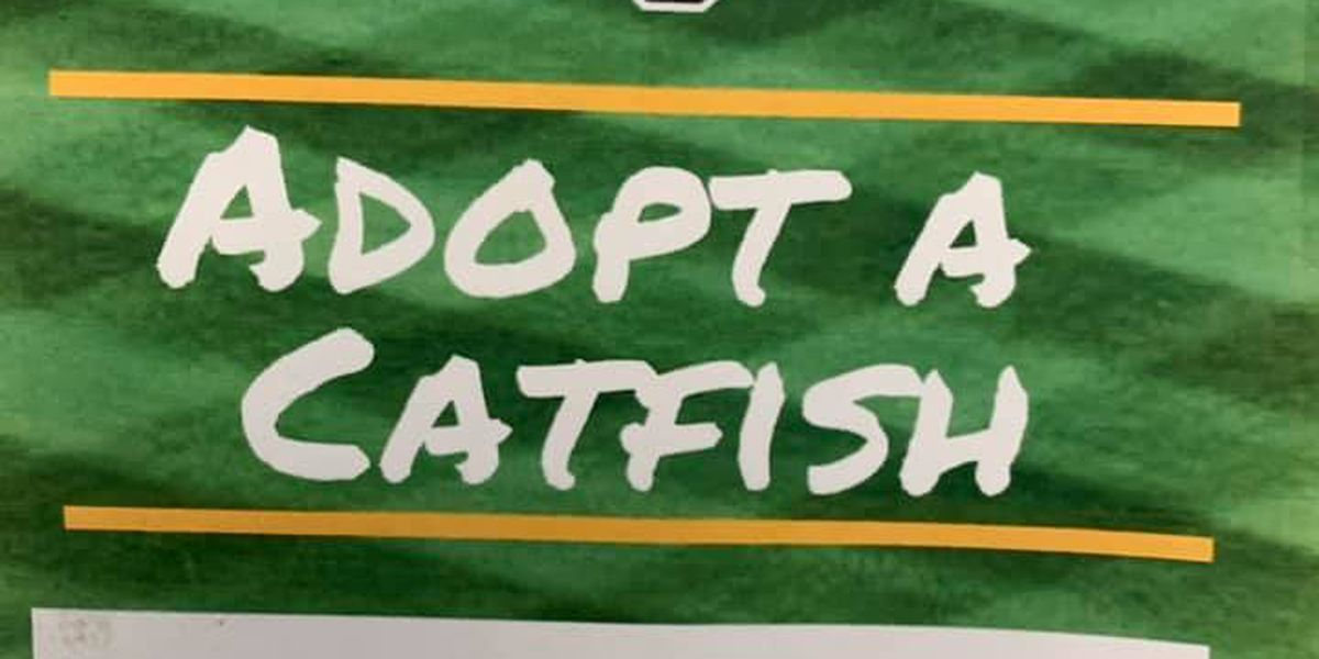 Cape Catfish looking for families to house players this summer