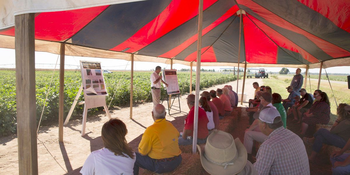 56th annual Fisher Delta Research Center field day