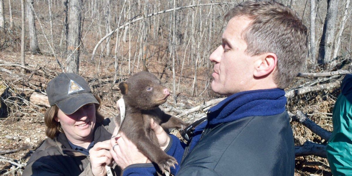 Gov. Greitens assists in MO Black Bear Project