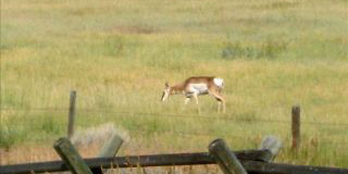 Ill. trying to limit spread of deer disease