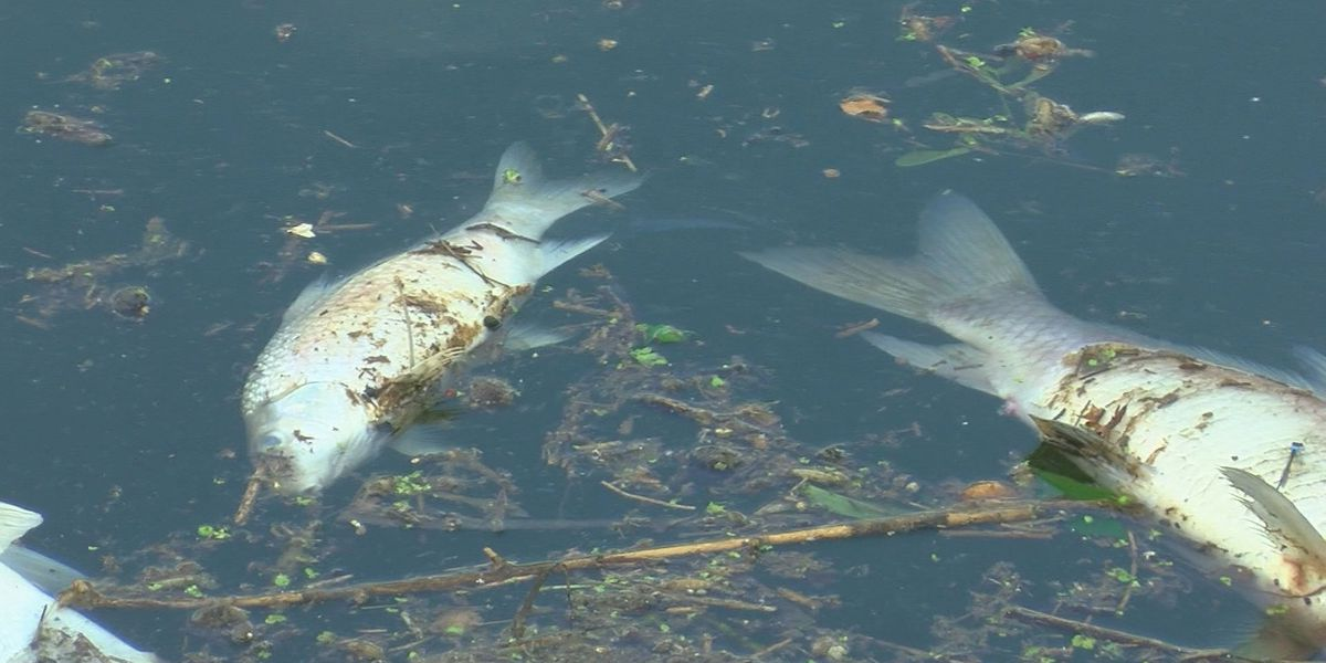 Massive trail of dead fish flows into Ohio River following Jim Beam warehouse fire