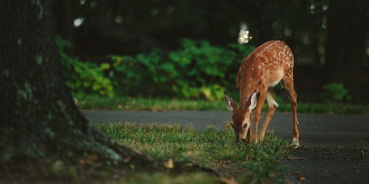 Deer feeding ban expanded to more MO counties