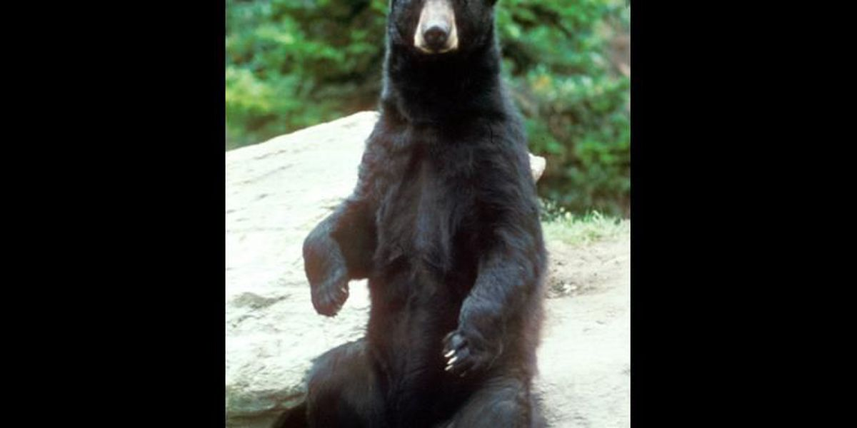 Mo. Dept. of Conservation continues to watch black bear population grow