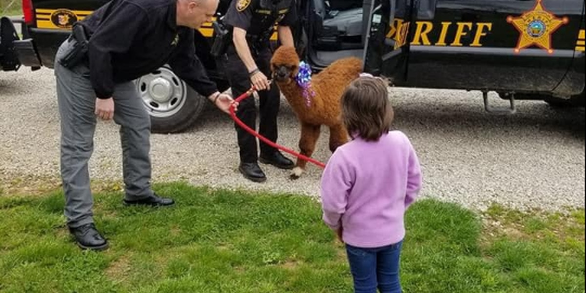 Law enforcement helps find new pet for Ohio girl after her alpaca was killed during drive-by shooting