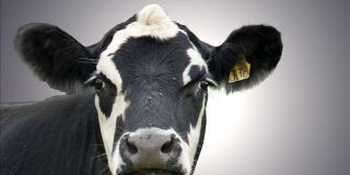 Sheriff: Bull kills western KY man