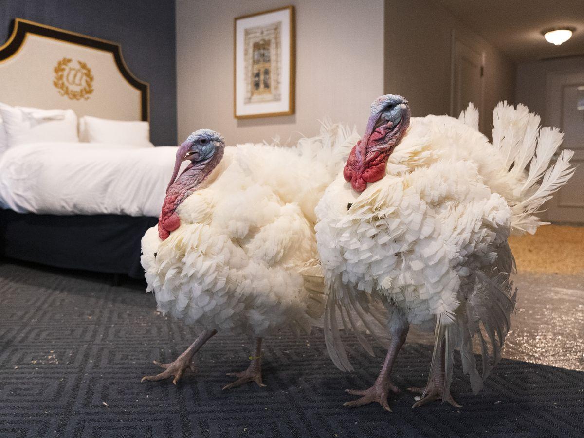 Turkey pardons on the menu at White House ceremony