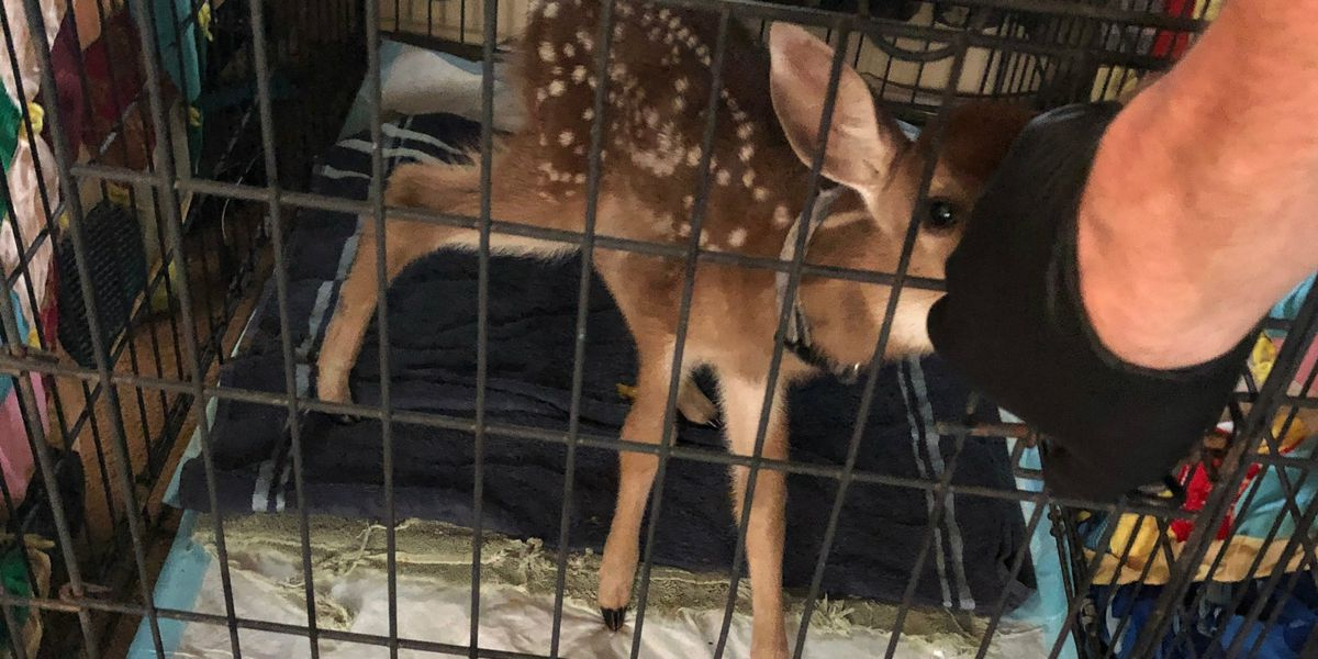 Deer in cage and drugs found during search leading to 4 arrests and 1 wanted