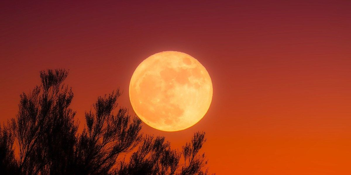 Don't miss the Harvest Moon