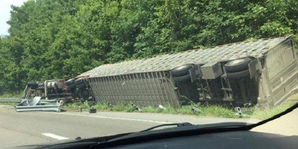 62 head of cattle inside overturned semi on I-55