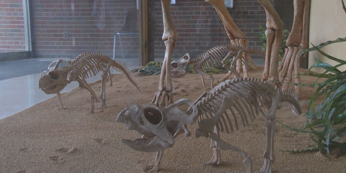 Schools asked to name 3 baby dinosaurs in SIU contest