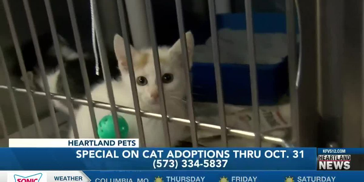 Heartland Pets: National Cat Day 10/29