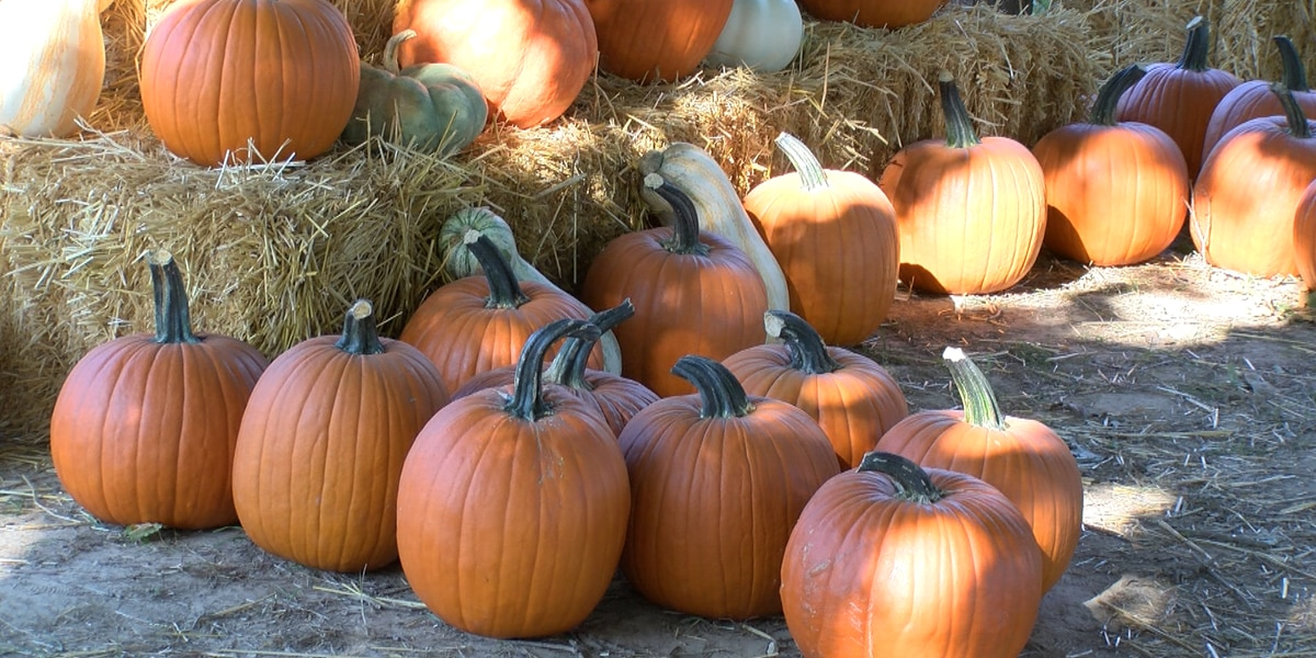 Pumpkin farm opens, adjusts to pandemic
