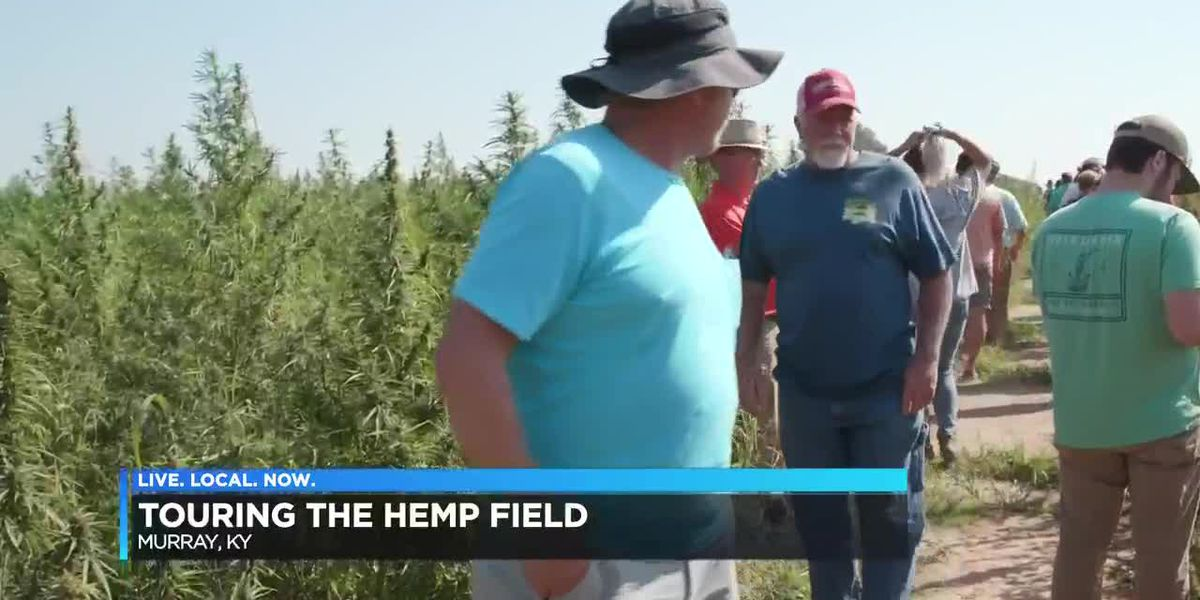 Touring the hemp field in Murray, Ky.