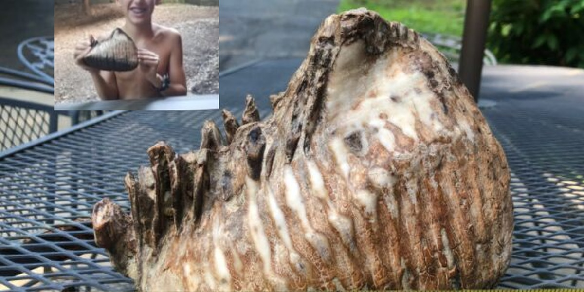12-year-old Ohio boy uncovers woolly mammoth tooth at local resort