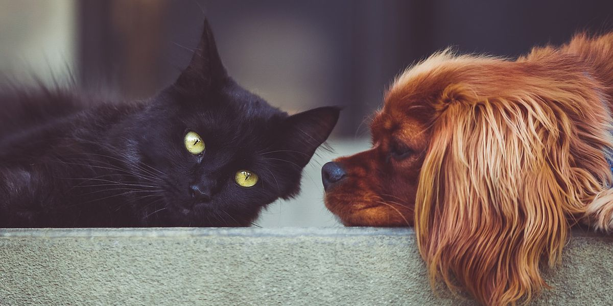 FDA Warns Pet Owners About Flea, Tick Meds Linked To Seizures
