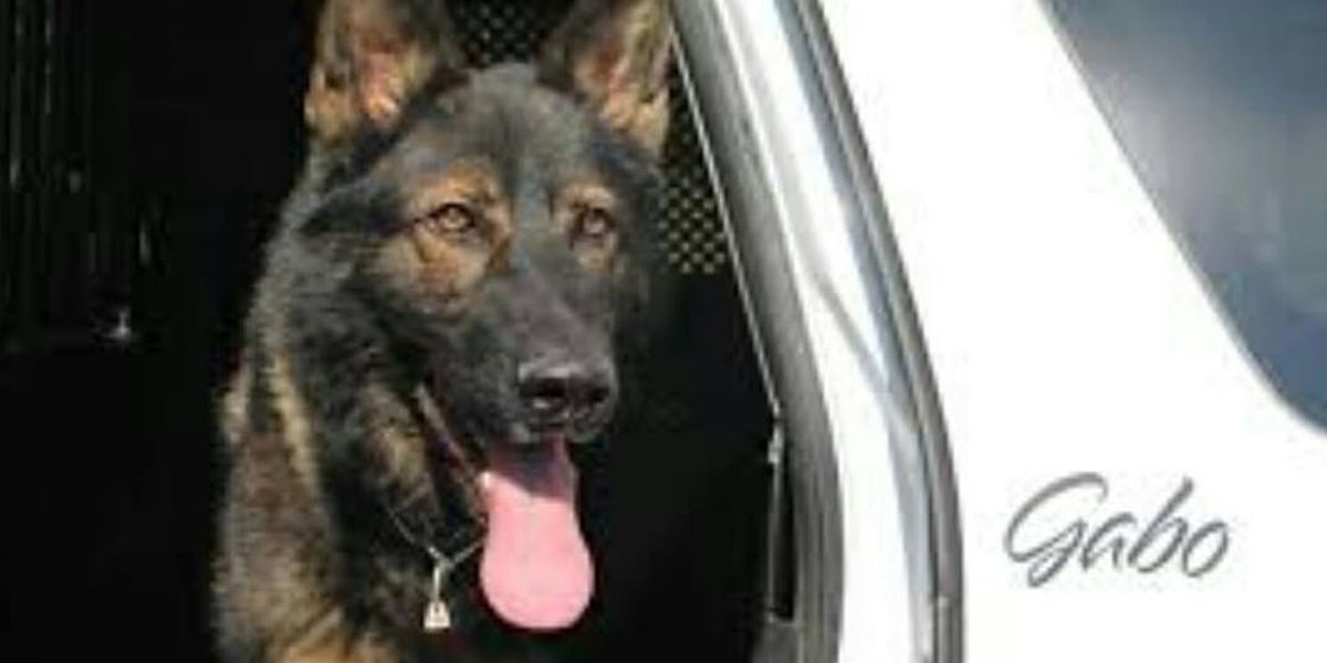 K9 officer honored as hero after shootout