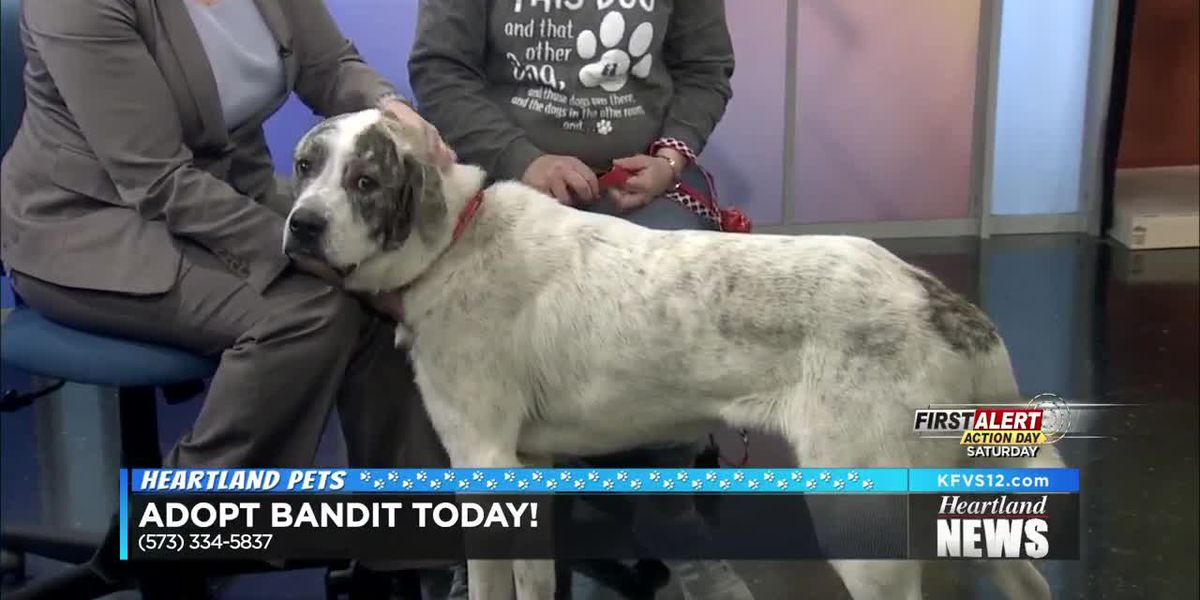 Heartland Pets featuring Bandit 2/21