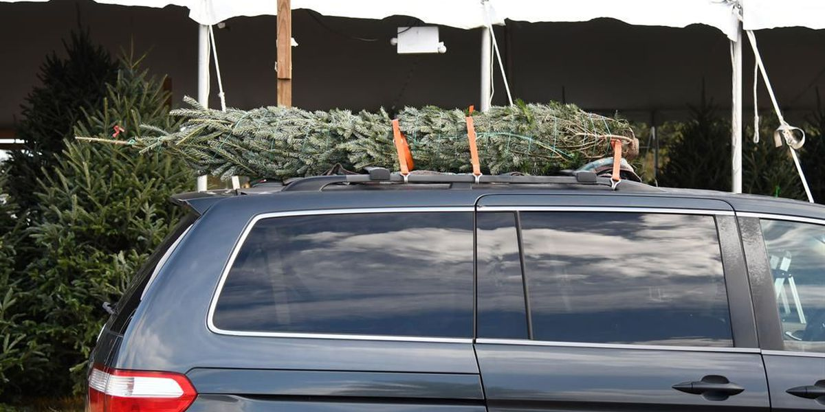 Improperly secured Christmas trees could cost thousands in damages