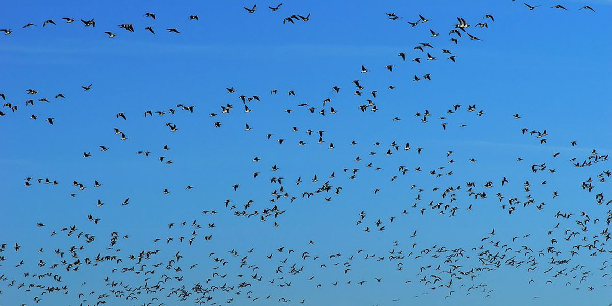 Mo Conservation Department and partners need help to save bird numbers