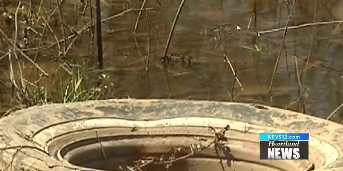 Insects could be an issue after heavy rain