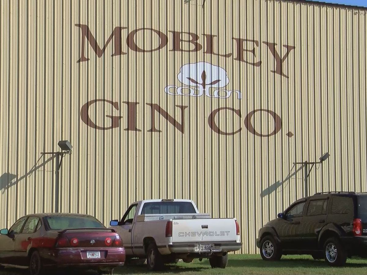 Cotton gin loses nearly 2/3 of cotton to gin this year due to Michael