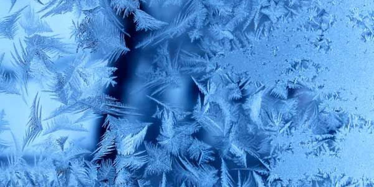 Business/Organizations affected by Winter Weather 11/12