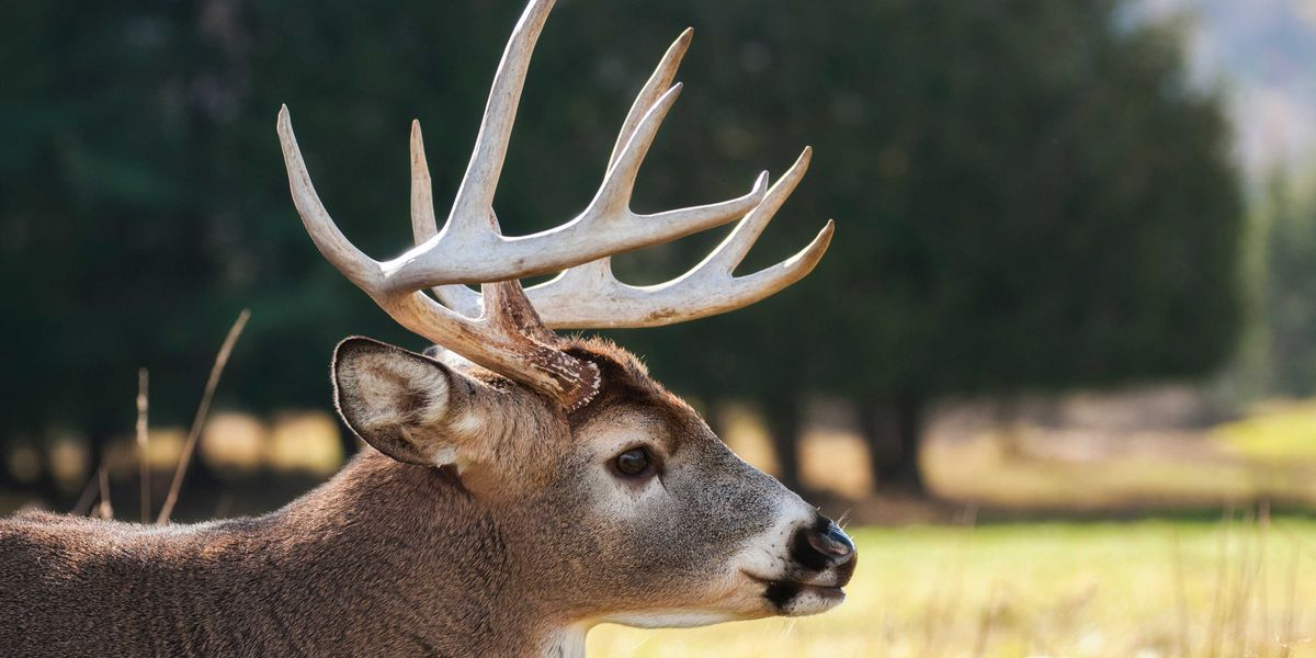MSHP reminding drivers to watch out for deer