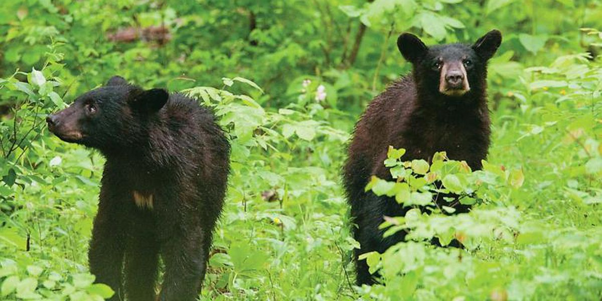 Missouri Department of Conservation warns the public to be Bear Aware