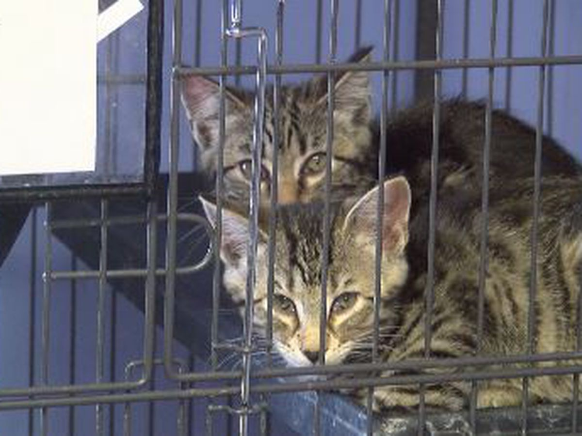 Empty the Shelter event at Humane Society of Southeast Mo. sends 60 pets to new homes