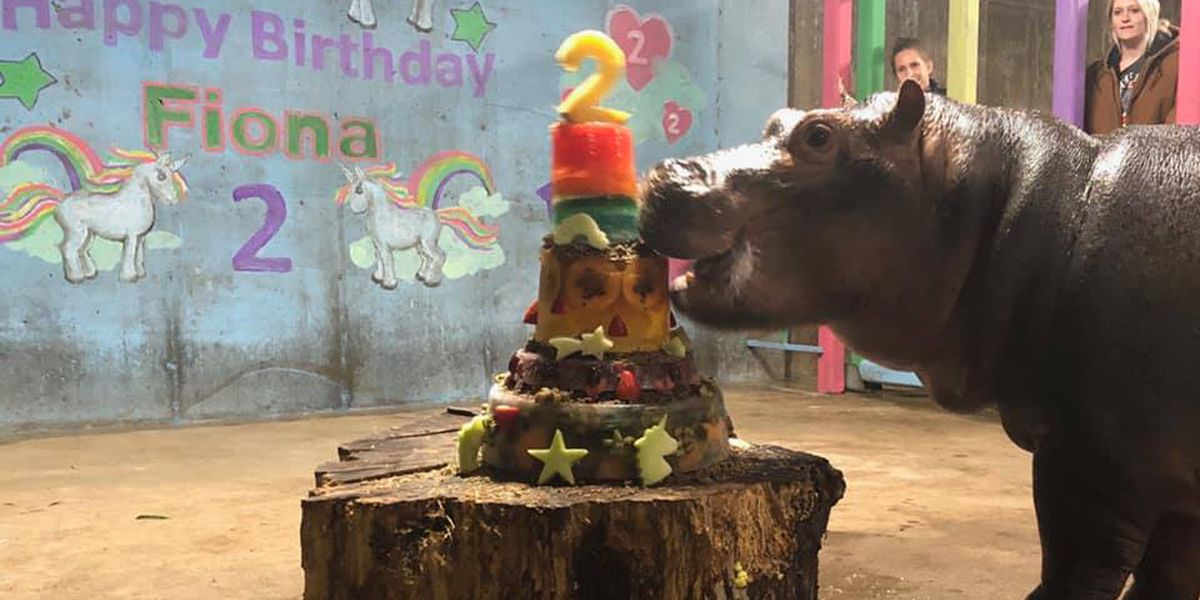 Double the fun: Cincinnati star Fiona celebrates 2nd birthday