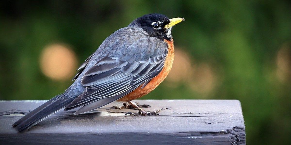 Best of the best places to bird watch in southeast Missouri