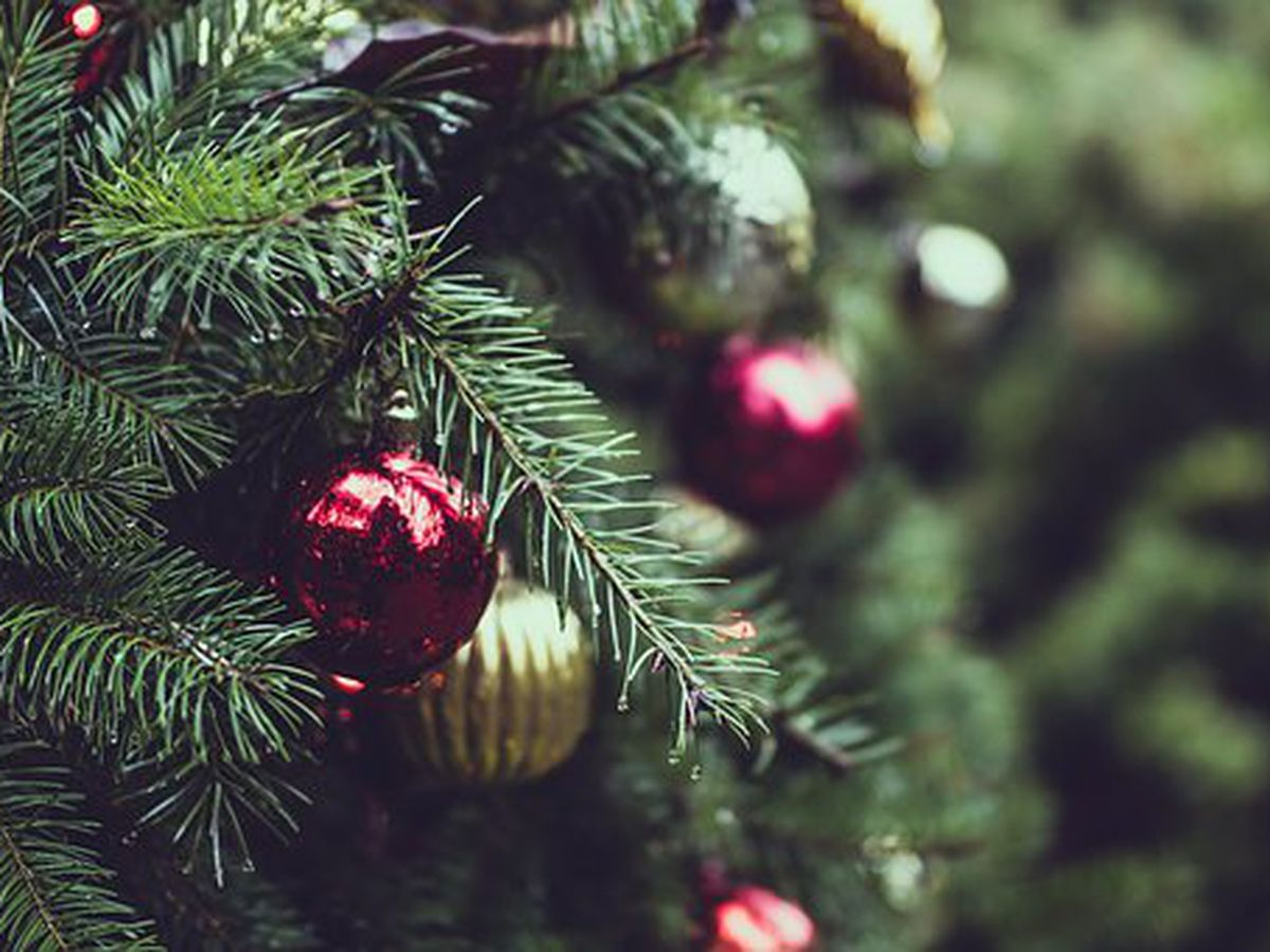 Governor and First Lady declare December as Christmas tree month