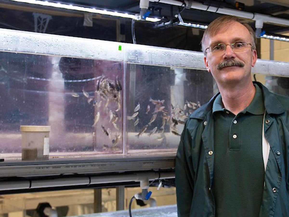 SIU professor finds possible breakthrough in controlling carp
