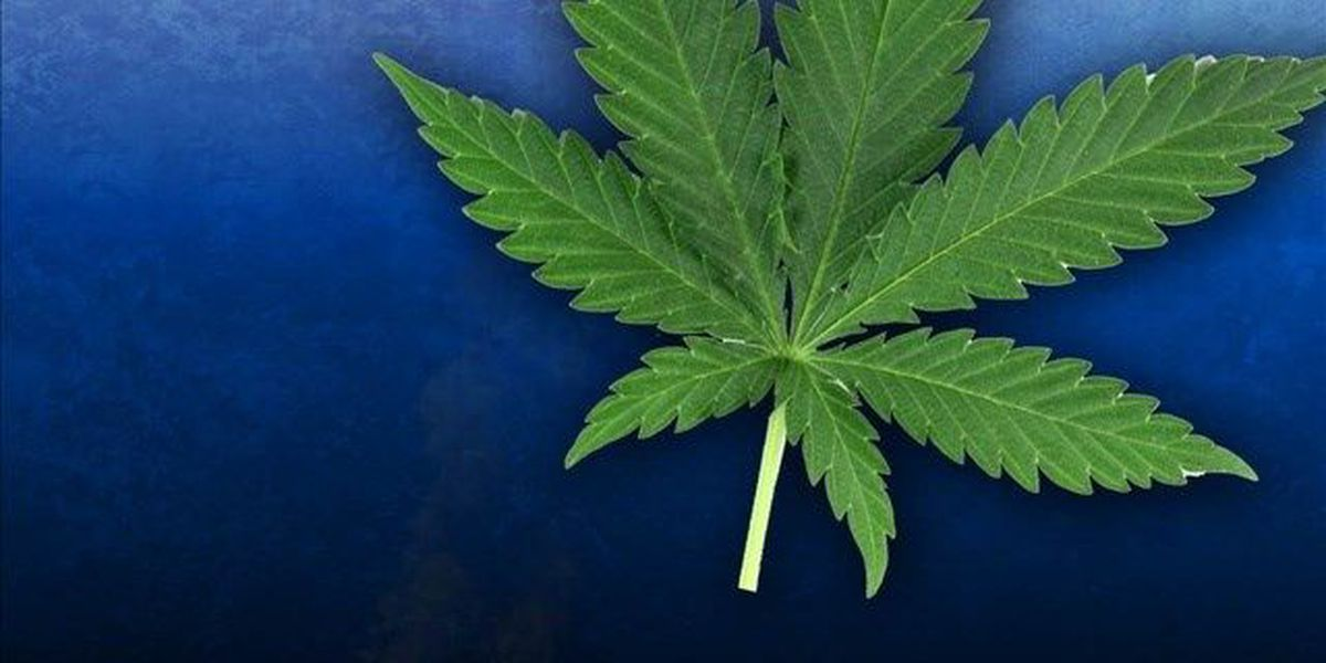 Columbia groups to study pot cultivation measure
