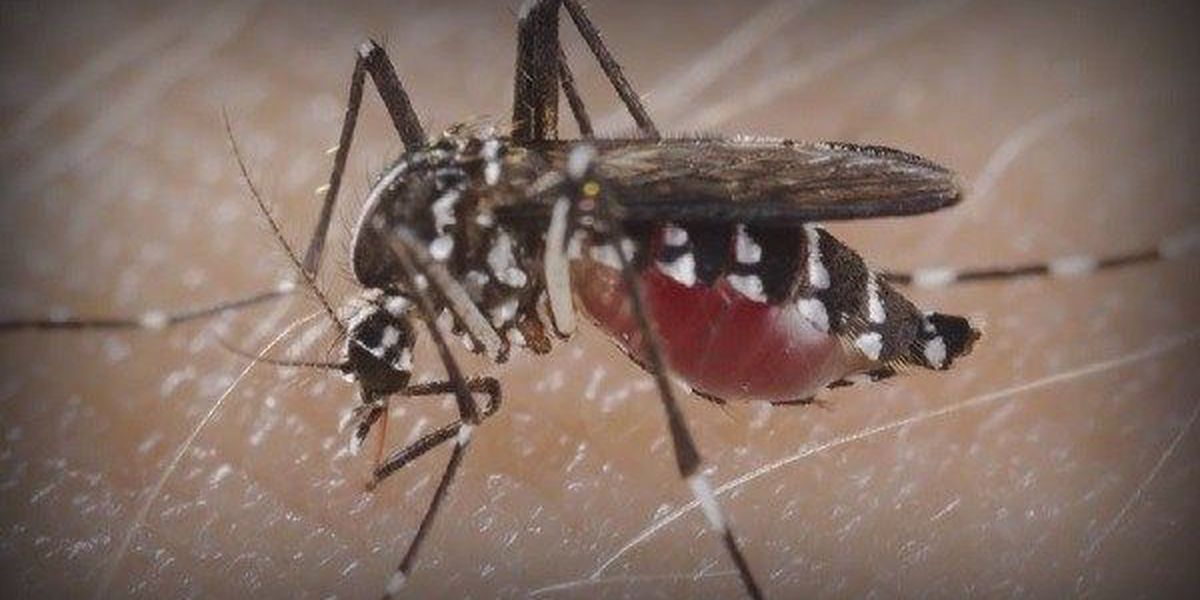 Travel Agent: You're more likely to catch Zika at home than on vacation