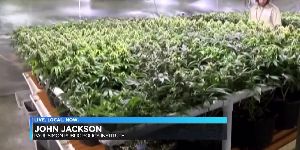 How Illinois legalizing recreational marijuana could affect you