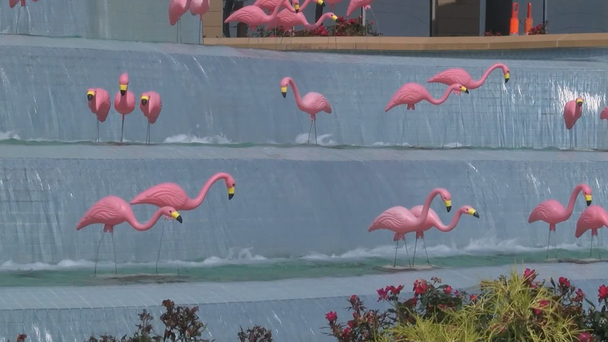 Flock of pink flamingos growing for COVID-19 survivors at ...