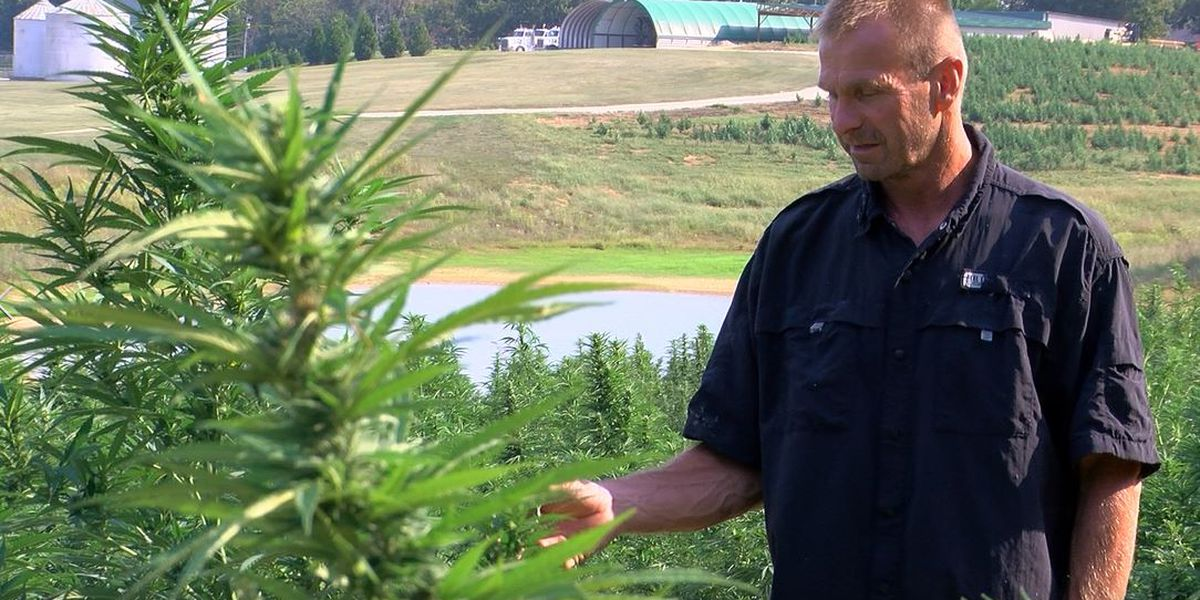 Local hemp farmer tired of getting burned by thieves