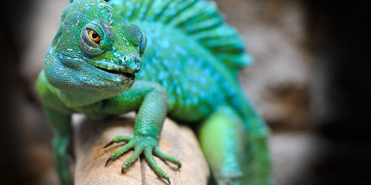 Chicago's Field Museum to add flying reptiles, gardens