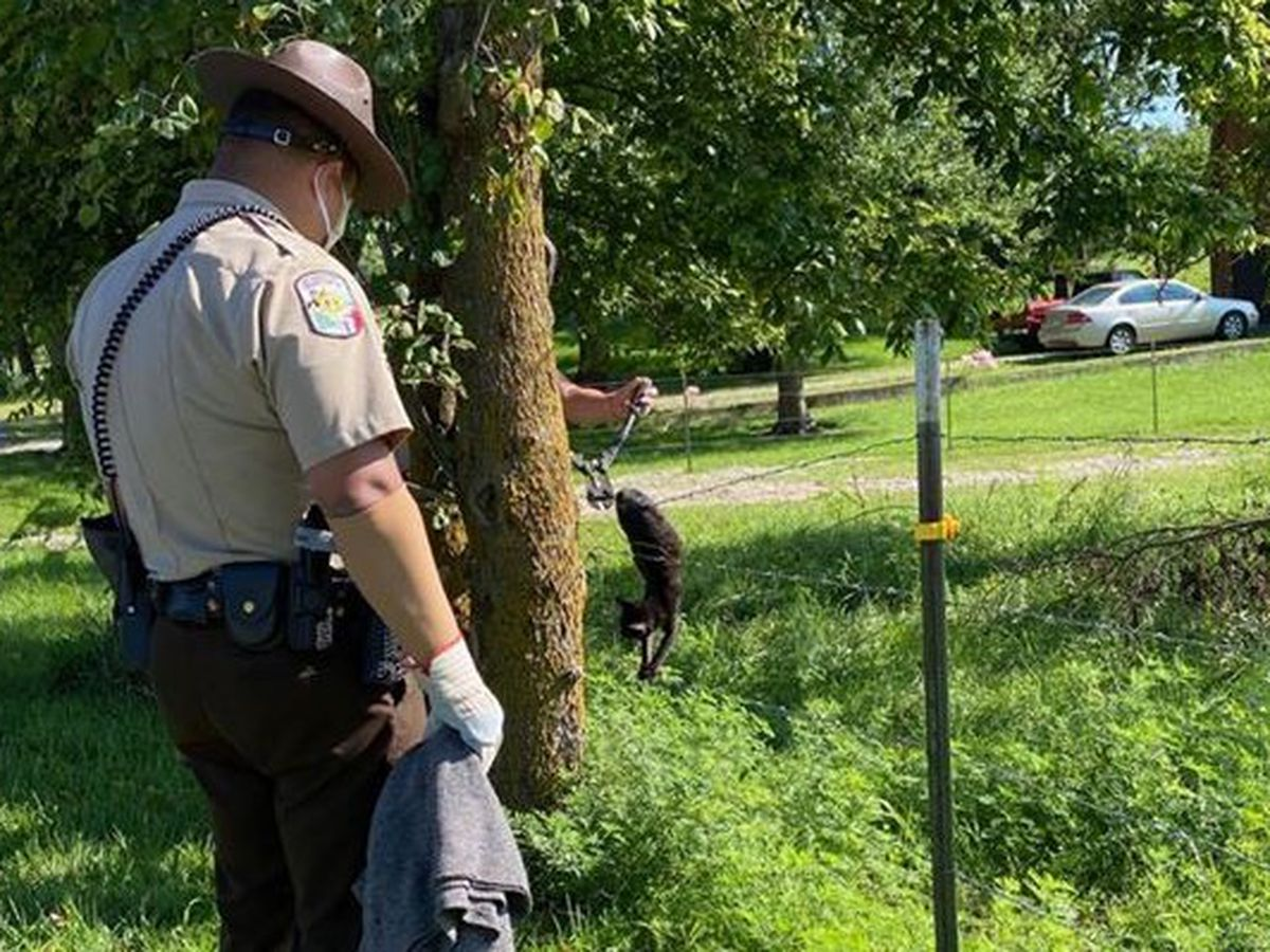 Cape Girardeau Co. deputies rescued cat from barbed wire fence