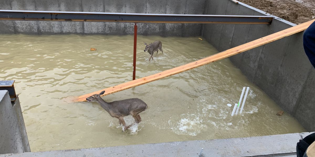 Zoneton Fire Protection rescues 2 deer from flooded basement