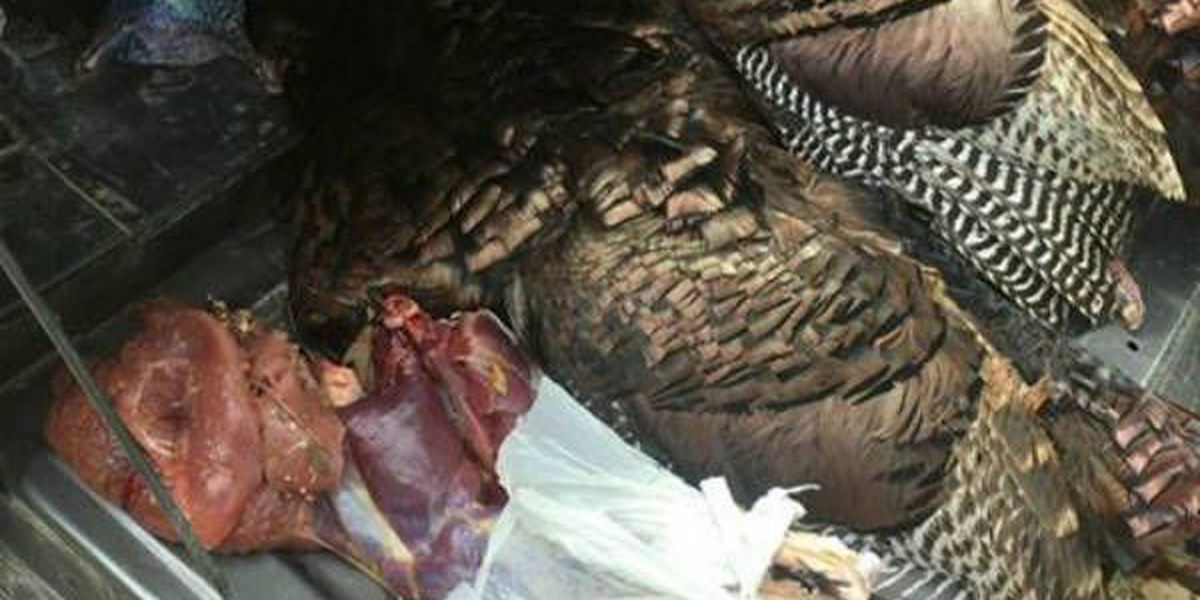 MDC: Hunter trespassed; cited for taking over-limit of turkeys
