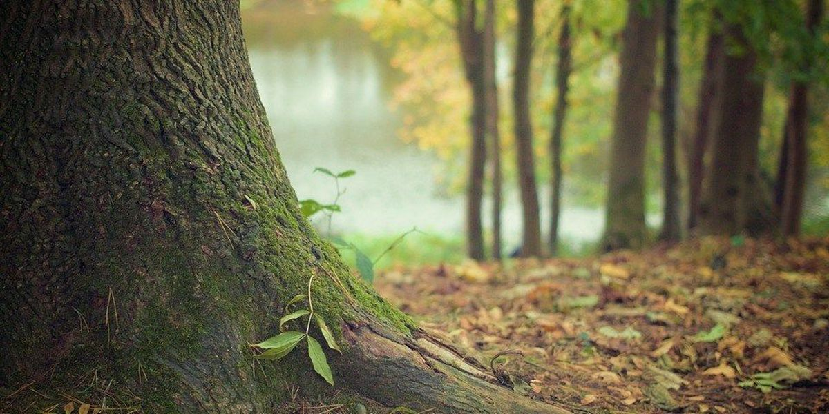 Transporting firewood could harm Illinois forest