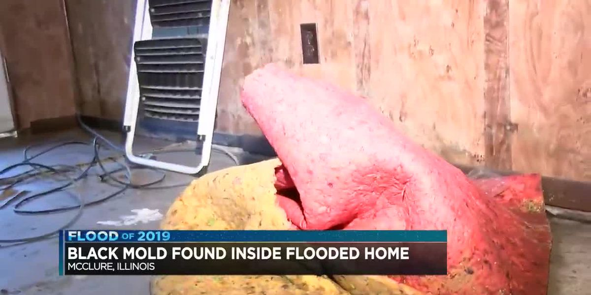 Man from McClure, IL finds black mold inside flooded home