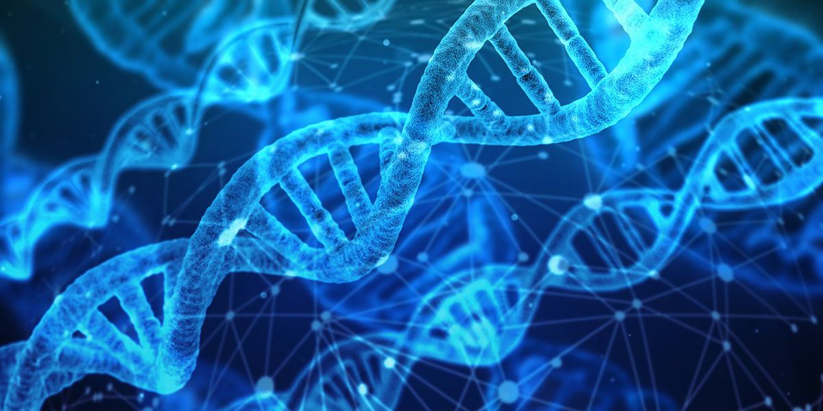 Discovering your lineage through DNA services