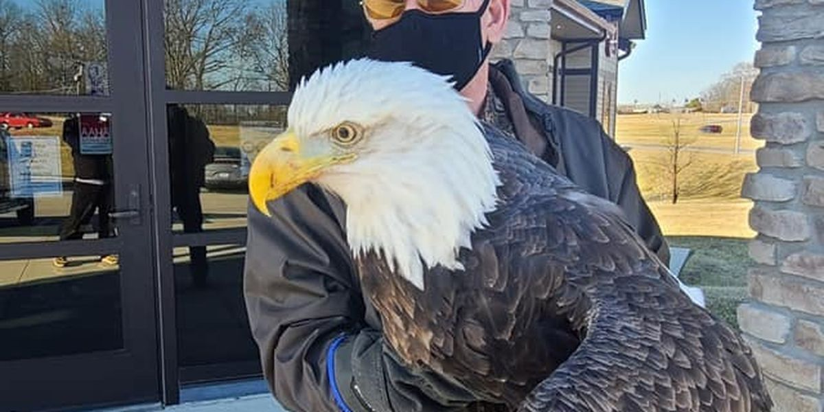 Bald eagle found in southeast Mo. sent to wildlife rehab facility