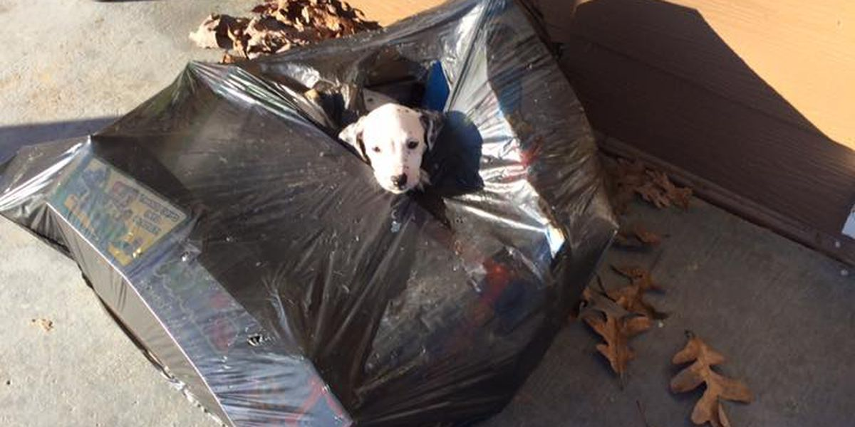 Puppy found in trash bag, looking for home in Poplar Bluff, MO