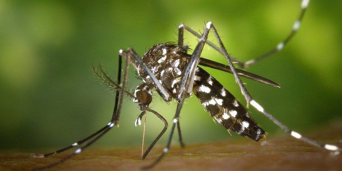 West Nile virus-positive mosquitoes found in southern IL
