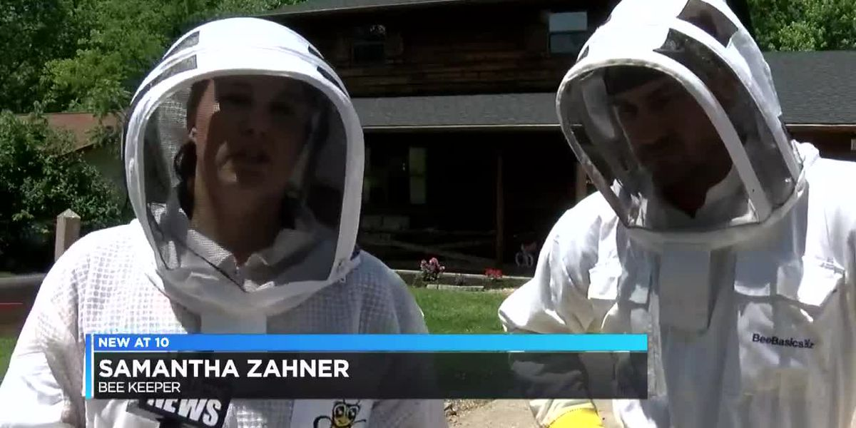 30,000 bees removed from Cape Girardeau home