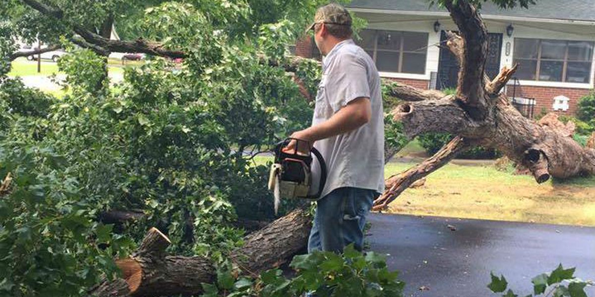 Trees, power lines down in Benton, MO after storms